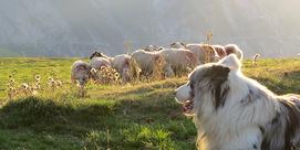 Terre de montagne - Fête agricole du Val d'Azun