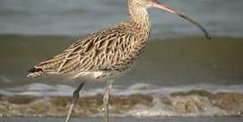 Balade Découverte des oiseaux migrateurs
