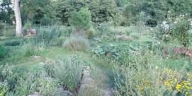 Visite de la pépinière « Les Orvets de Bizous »