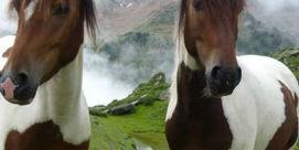Animations à La Mongie : Balade à cheval