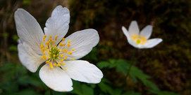 Que fait le Parc National des Pyrénées en matière de flore ?