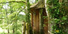 La cabane aux oiseaux dans les arbres :