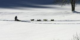 Louisette et les huskies