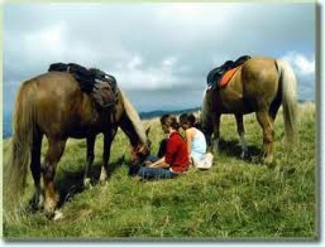 0-chevaux.jpg