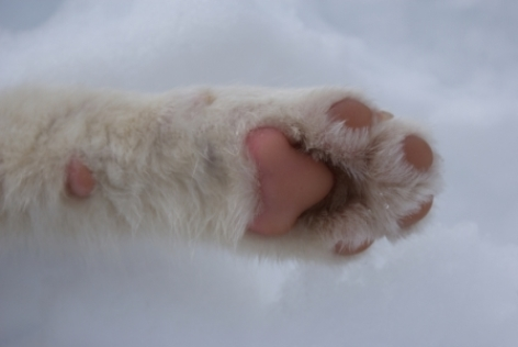 5-chien-de-traineau.jpg