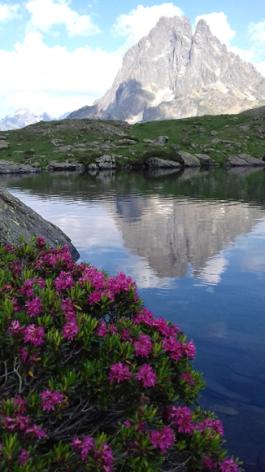 6-fleurs2-deffarge-argelesgazost-HautesPyrenees.jpg
