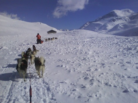 3-chiens-de-traineaux-hautes-pyrenees.jpg
