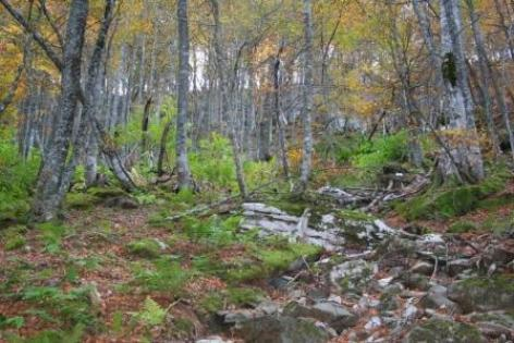 5-pyrenesens-foret-boosilhen-HautesPyrenees.jpg