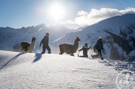 13-Les-lamas-des-7-vallees--8-.jpg