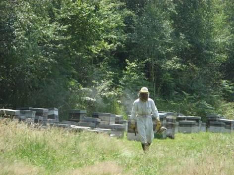 2-apiculteurmielleriedesescales-villelongue-HautesPyrenees.jpg.JPG