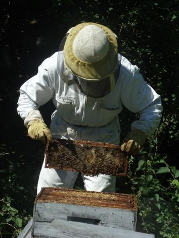 4-apiculteur2mielleriedesescales-villelongue-HautesPyrenees.jpg.JPG