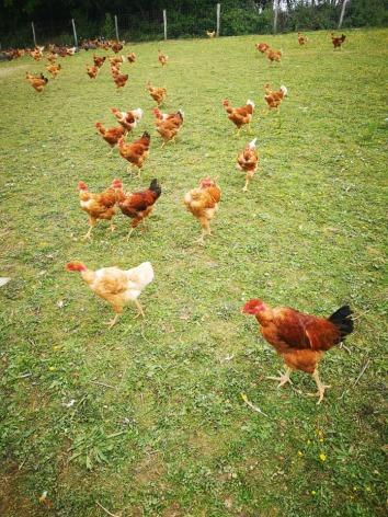 3-Elevage-poulets---Ferme-du-Tucoulet.jpg