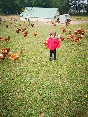 4-Elevage-poulets2---Ferme-du-Tucoulet.jpg