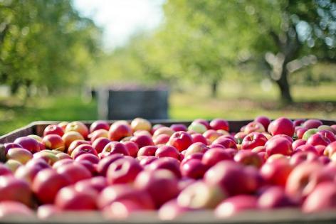 0-pommes.png