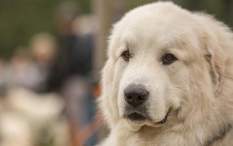 0-2017-fete-chiens-catois.jpg