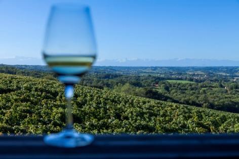 1-Vignoble-vin-blanc-BD-2015---P.-Vincent-OT-Lourdes.jpg