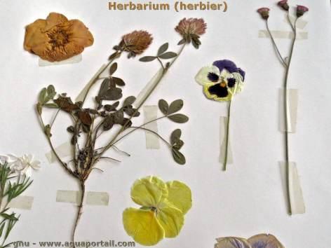 0-herbier-herbarium.jpg