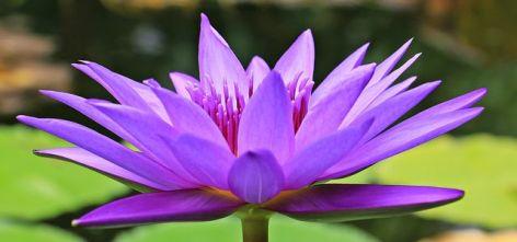 2-Meditation-2.jpg