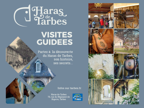 0-visites-guidees-haras-2019bis.jpg