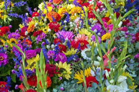 0-Les-Floralies.jpg