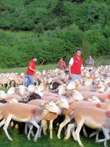 0-pastoralisme-3.jpg