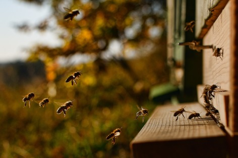 0-2019-abeilles.jpg