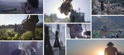 0-Degustation-de-vins-1280X57-2.jpg