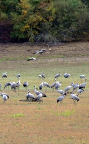 0-oiseaux9.jpg