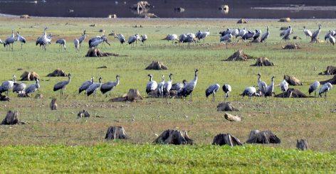 1-oiseaux14.jpg
