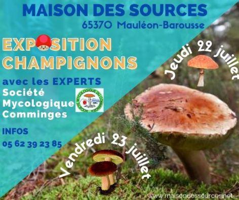 0-Exposition-Champignons.jpg