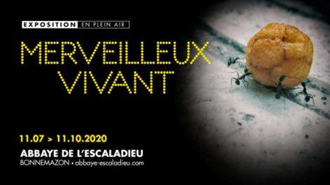 0-Merveilleux-1920-x-1080-px-768x432.jpg