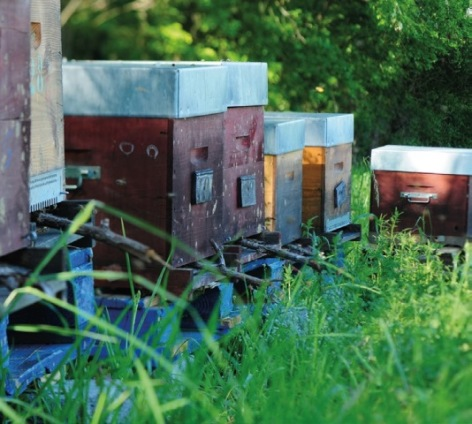 0-Balade-aux-ruches.jpg