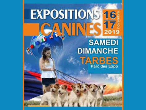 0-expo-canines.jpg