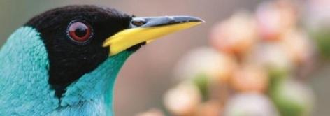 0-2020-Expo-PNP-oiseaux-Guyane.jpg