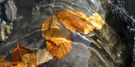 0-caresses-de-feuilles-pnp-2.jpg