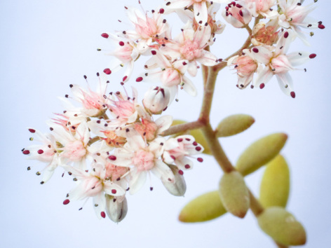 0-visuel-fleur-cerisier.jpg