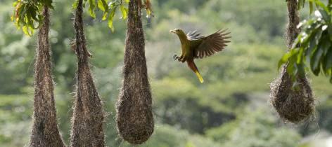 0-Les-oiseaux-de-guyane--une-.jpg