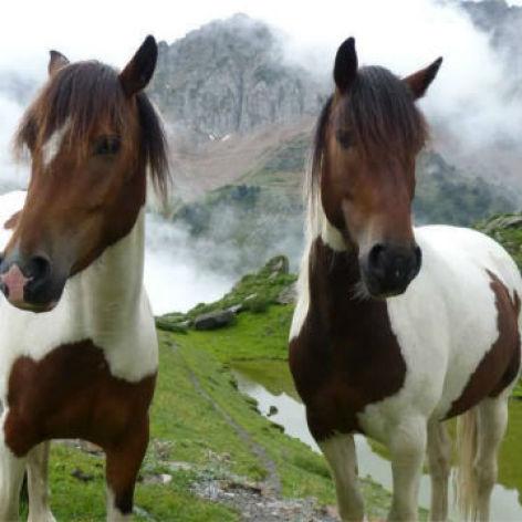 0-les-chevaux-de-la-mongie.JPG