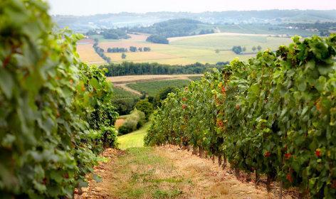 3-vigne-chateau-Montus.jpg