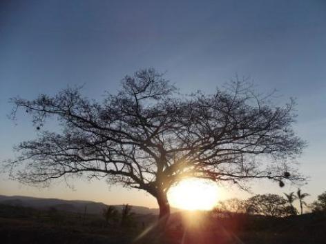 0-l-arbre-de-vie.jpg