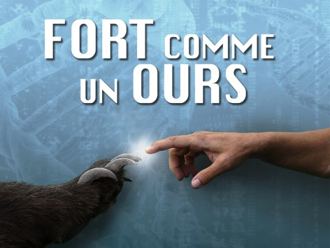 0-Fort-comme-ours.jpg