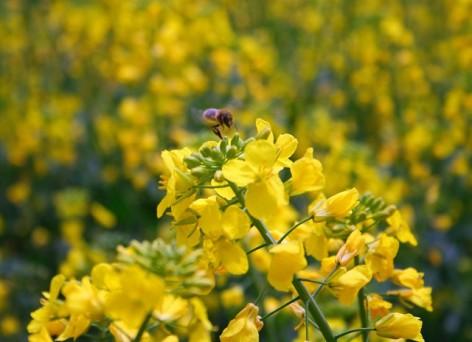 0-abeille-2.jpg