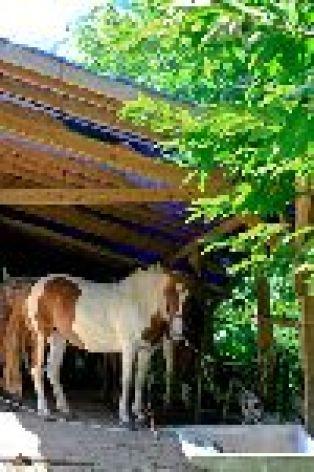1-cheval-bourdalat-argelesgazost-hautesPyrenees.jpg