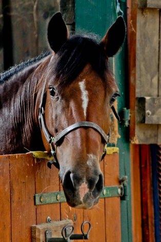 8-cheval-fermedubourdalat-ouzous-HautesPyrenees.jpg.jpg