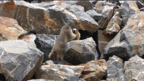 18-Jeux-de-marmottes-via-A-Casteret.png