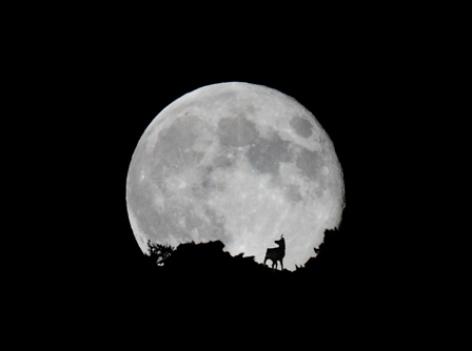 5-izard-lune.psd.jpg