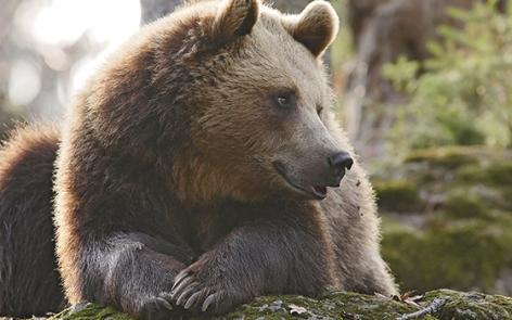 1-2016-parc-animalier-pyrenees-00-argeles-gazost.jpg