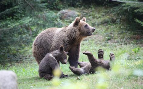 1-2016-parc-animalier-pyrenees-02-argeles-gazost.jpg