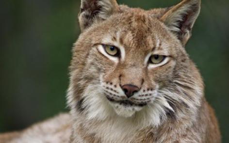 10-2016-parc-animalier-pyrenees-10-argeles-gazost.jpg