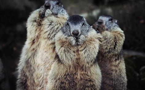 11-2016-parc-animalier-pyrenees-12-argeles-gazost.jpg